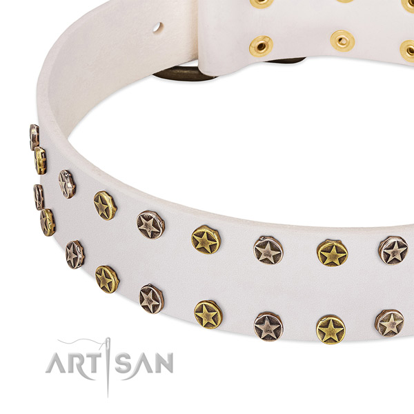Significant studs on natural leather collar for your four-legged friend