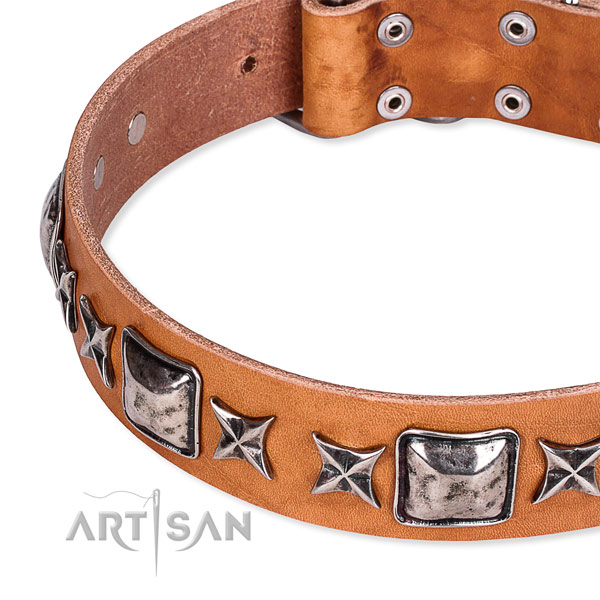 Comfy wearing studded dog collar of strong full grain leather