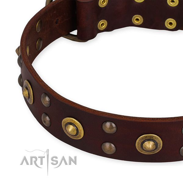 Full grain genuine leather collar with corrosion proof fittings for your stylish dog
