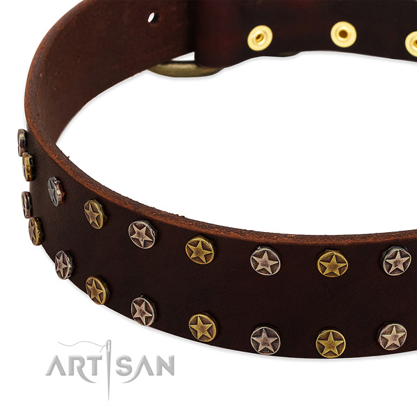 Comfy wearing natural leather dog collar with significant embellishments