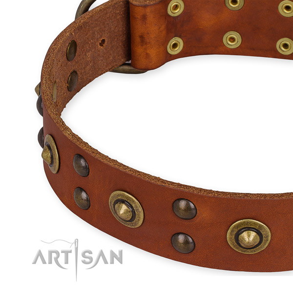 Leather collar with durable fittings for your attractive dog