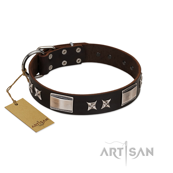 Unusual dog collar of leather