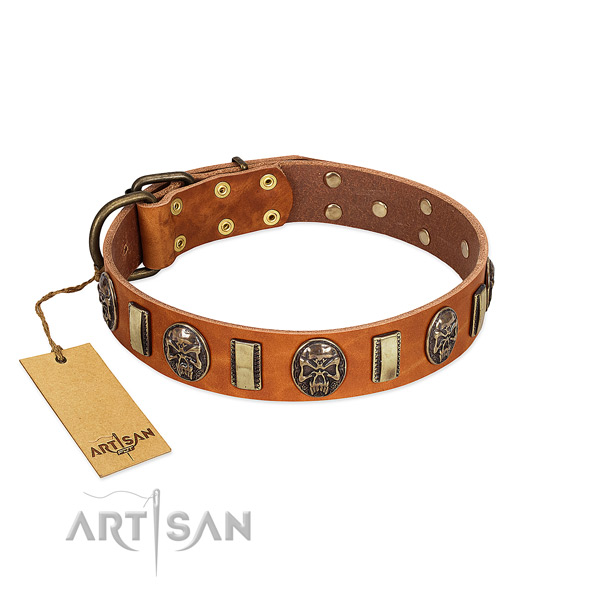Unique leather dog collar for everyday walking