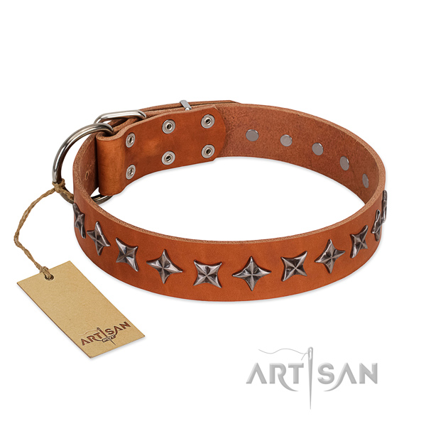Daily use dog collar of fine quality natural leather with embellishments