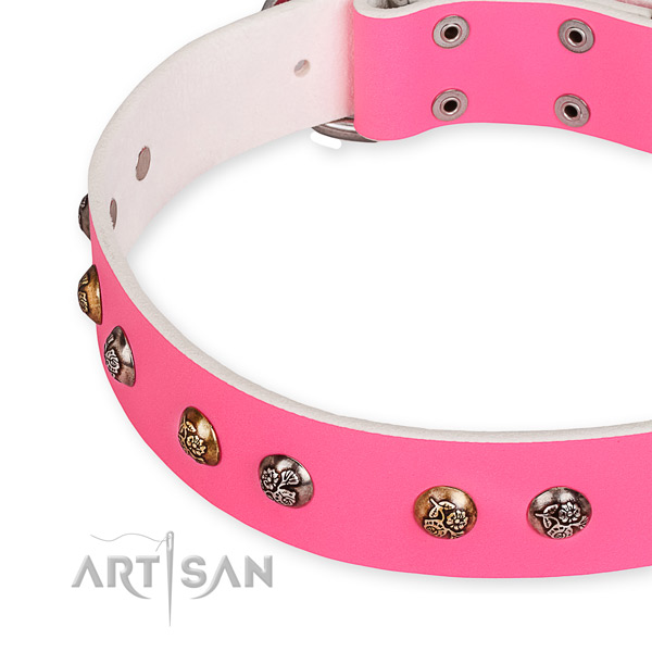 Full grain leather dog collar with trendy corrosion resistant adornments