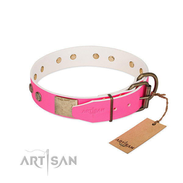 Durable studs on everyday use dog collar