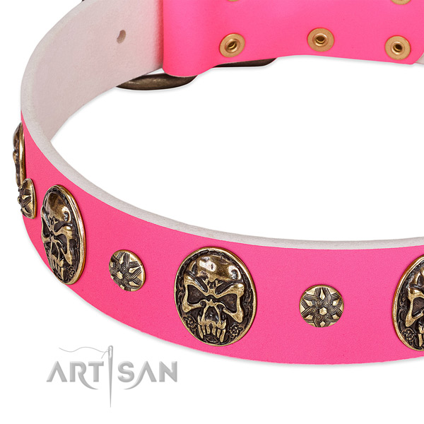 Trendy dog collar crafted for your stylish four-legged friend