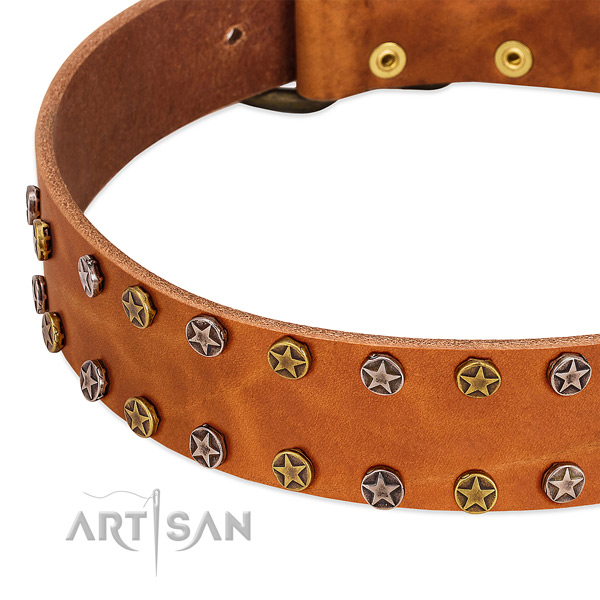 Walking leather dog collar with extraordinary adornments