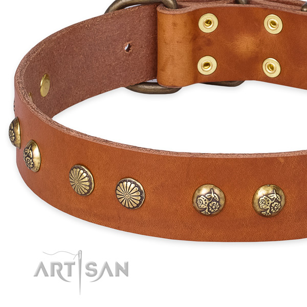 Full grain genuine leather collar with corrosion resistant fittings for your handsome canine
