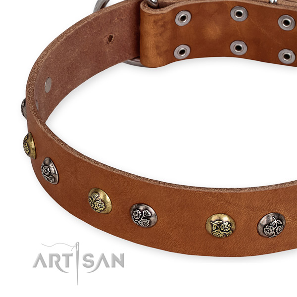 Full grain leather dog collar with unusual corrosion resistant studs
