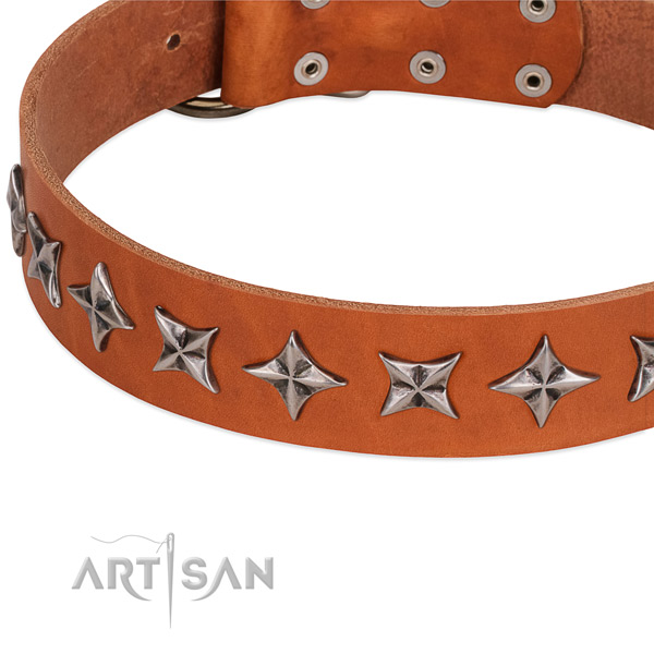 Daily walking studded dog collar of quality full grain leather