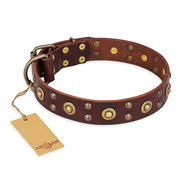 """Caprice of Fashion"" FDT Artisan Brown Leather Rottweiler Collar with Round Decorations"