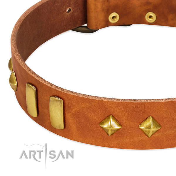Fancy walking natural leather dog collar with unusual adornments
