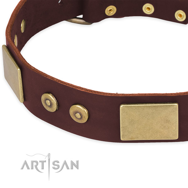 Genuine leather dog collar with embellishments for walking