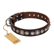 """Step and Sparkle"" FDT Artisan Glamorous Studded Brown Leather Rottweiler Collar"