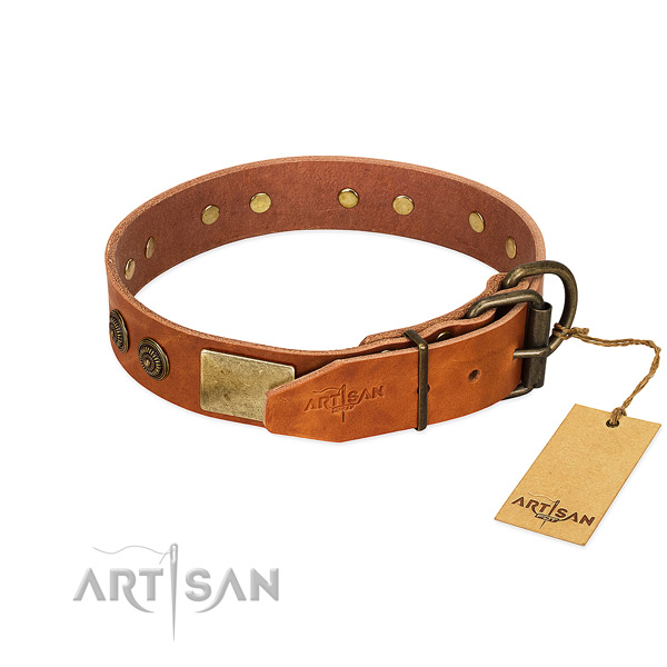 Corrosion proof D-ring on genuine leather collar for everyday walking your four-legged friend