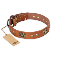 """Stunning Dress"" FDT Artisan Tan Leather Rottweiler Collar with Old Bronze Look Plates and Studs"