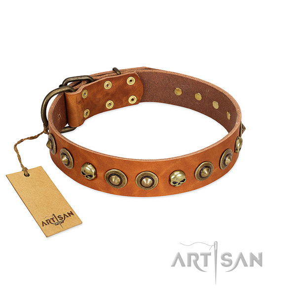Natural leather collar with exceptional studs for your dog