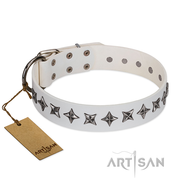 Fancy walking dog collar of reliable full grain leather with adornments