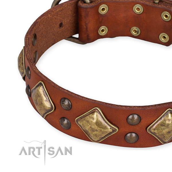 Leather collar with reliable fittings for your lovely dog
