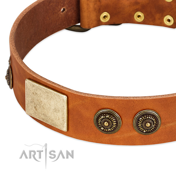 Easy adjustable dog collar created for your beautiful canine