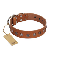 """Silver Age"" Fashionable FDT Artisan Tan Leather Rottweiler Collar with Silver-Like Studs"